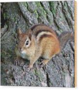 Lil Chipmunk Wood Print