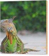 Lil Iguana Wood Print