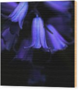 Bluebell Abyss Wood Print