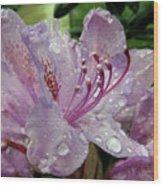 Lilac Azalea Wood Print