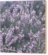 Lilac Bells Wood Print