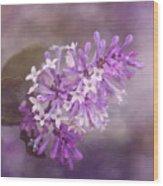 Lilac Blossom Wood Print