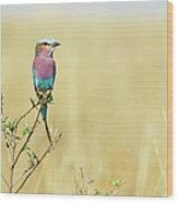 Lilac-breasted Roller (coracias Caudata) Wood Print by Elliott Neep