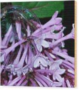Lilac Bubble Wood Print