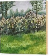 Lilac Bushes In Springtime Wood Print
