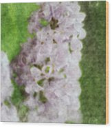 Lilac Dreams - Digital Watercolor Wood Print