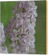 Lilac Dreams With Corner Decorations Wood Print