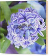 Lilac In Bloom Wood Print