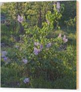 Lilac In Sunshine Wood Print