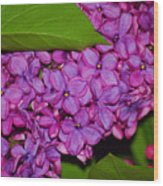 Lilac In The Dark Wood Print