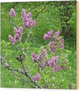 Lilac In The Spring Meadow Wood Print