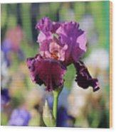 Lilac Iris In Bloom Wood Print