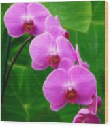 Lilac Orchid Beauties Wood Print
