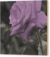 Lilac Rose Wood Print by Vijay Sharon Govender