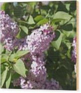 Lilacs 5544 Wood Print