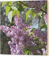 Lilacs 5545 Wood Print