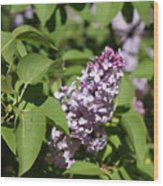Lilacs 5551 Wood Print