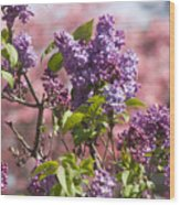 Lilacs And Dogwoods Wood Print