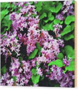 Lilacs In May Wood Print