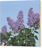 Lilacs In The Sky Wood Print