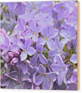 Lilacs-lavender Lovely  Wood Print