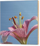 Lilies Art Prints Pink Lily Flower Giclee Art Prints Baslee Troutman Wood Print