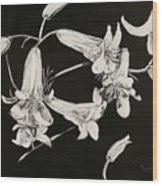 Lilies Black And White Wood Print by Elizabeth Lane