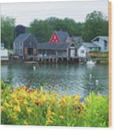 Lilies By The Bay, Cape Porpoise Me Wood Print