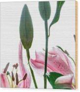 Pink Oriental Starfire Lilies Wood Print