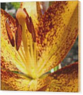 Lilies Glowing Orange Lily Flower Floral Art Print Canvas Baslee Troutman Wood Print