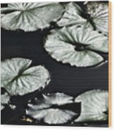 Lilies Of The Deep Wood Print