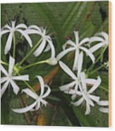 Lilies Of The Swamp Wood Print