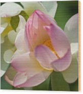 Lilies Of The Water Ib Wood Print