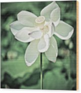 Lilies Of The Water Ivb Wood Print