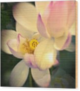 Lilies Of The Water Vib Wood Print
