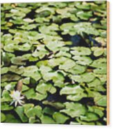Lilies Of The Water Viii Wood Print