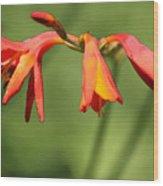 Lilies On Fire Wood Print