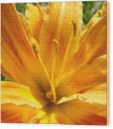 Lilies Orange Yellow Lily Flower 1 Giclee Art Prints Baslee Troutman Wood Print