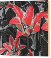 Lilies With A Splash Of Color Wood Print