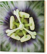 Lilikoi Blossom I Wood Print by Charmian Vistaunet