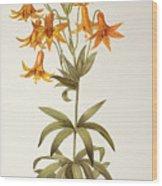 Lilium Penduliflorum Wood Print
