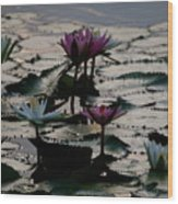 Lillies On The Lake Wood Print by Kimberly Camacho