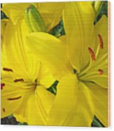 Lilly Flowers Art Prints Yellow Lilies Floral Baslee Troutman Wood Print