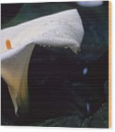 Lilly Of The Tears Wood Print