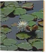 Lilly On The Pad Wood Print