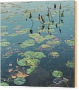 Lilly Pad In Pond  Wood Print