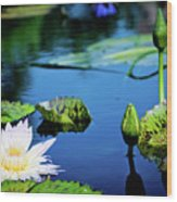 Lilly Pad Wood Print