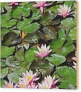 Lilly Pads In Bloom Wood Print