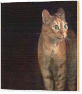 Lilly Standing At The Door Wood Print by Hazel Billingsley