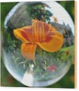 Lilly Thru A Crystal Ball Wood Print